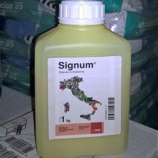 immagine Signum