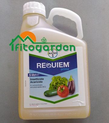 IMG_REQUIEM_PRIME